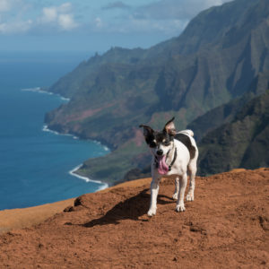 Bring Your Dog Hiking